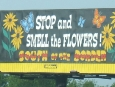 south_of_the_border_sign_18_-_stop_and_smell_the_flowersjpg.jpg